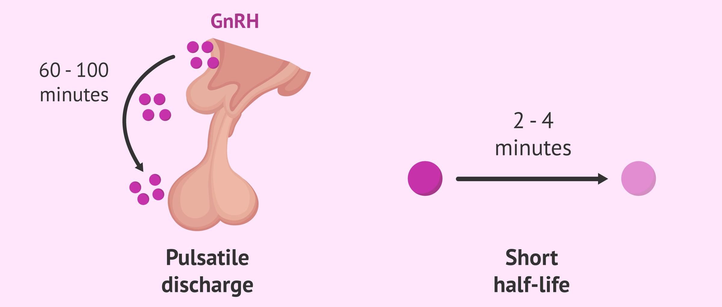 Characteristics of GnRh
