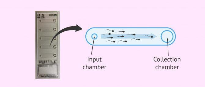 Imagen: Fertile Chip Device
