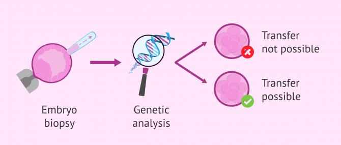 Imagen: genetic-analysis-embryo-transfer