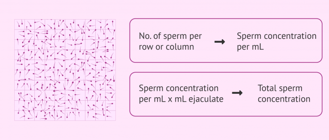 Imagen: Makler chamber for evaluating sperm concentration