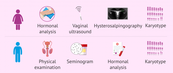 Imagen: Fertility study