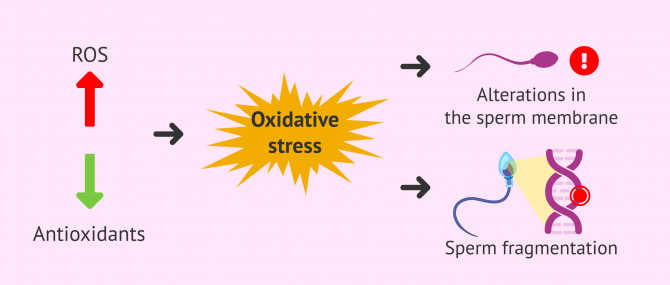 Imagen: Oxidative stress and recurrent miscarriage