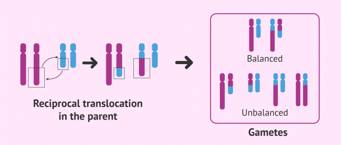 Imagen: Reciprocal translocation in the progenitor