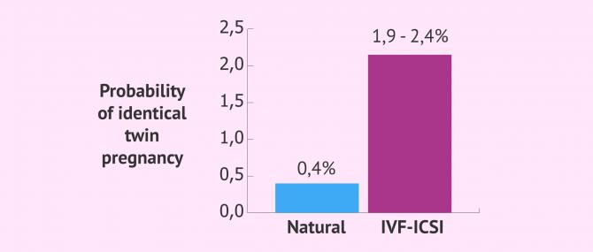 Imagen: Probability of identical twins by in vitro fertilisation