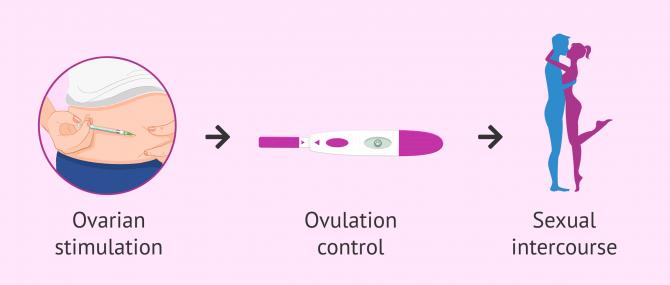 Imagen: Coitus programmed to achieve pregnancy