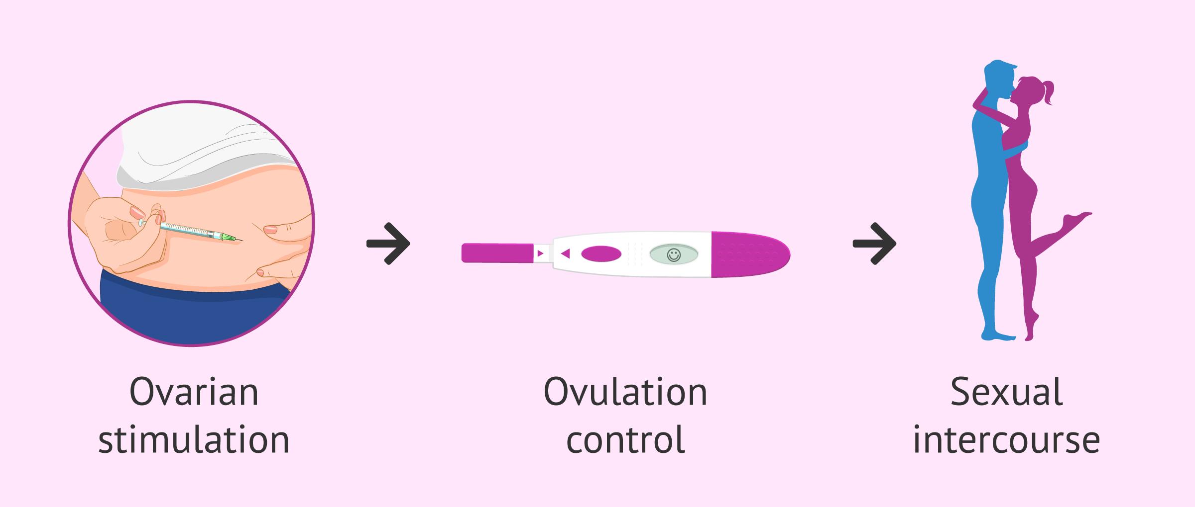 Coitus programmed to achieve pregnancy